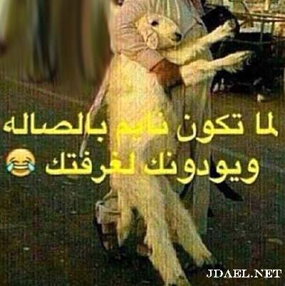 اروع نكت العالم العربي كيد النساء وحوار العمالقة