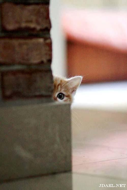 صور قطط جميلة ومواقف حلوة بشقاوةالبساس